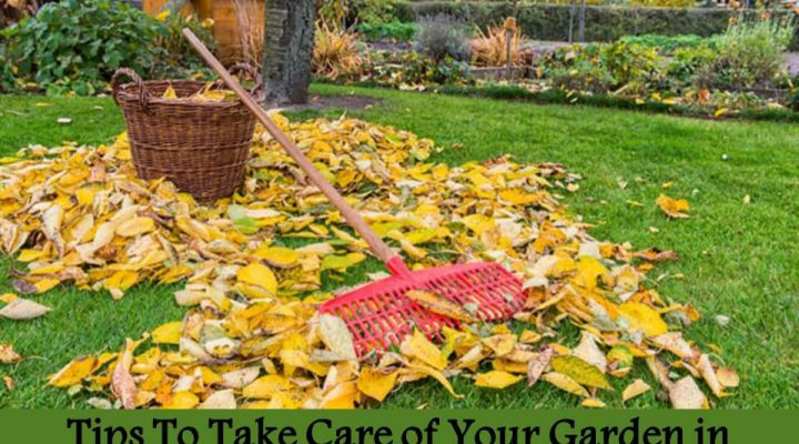 Tips To Take Care of Your Garden in Autumn