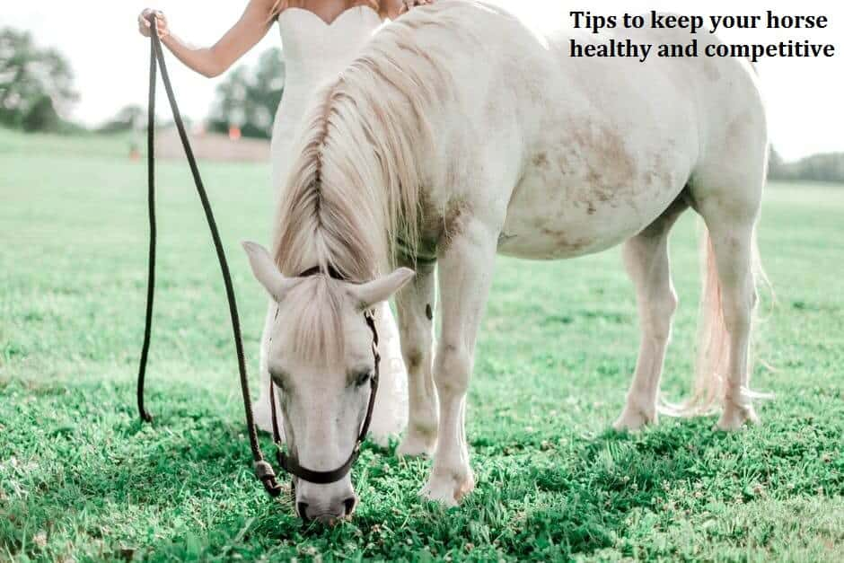 Tips to keep your horse healthy and competitive