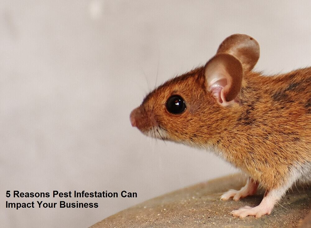 5 Reasons Pest Infestation Can Impact Your Business