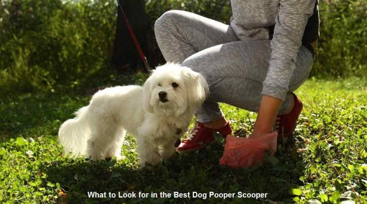 What to Look for in the Best Dog Pooper Scooper