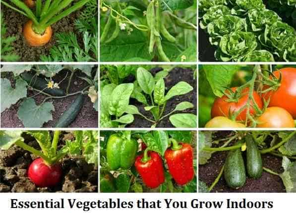 Essential Vegetables that You Grow Indoors