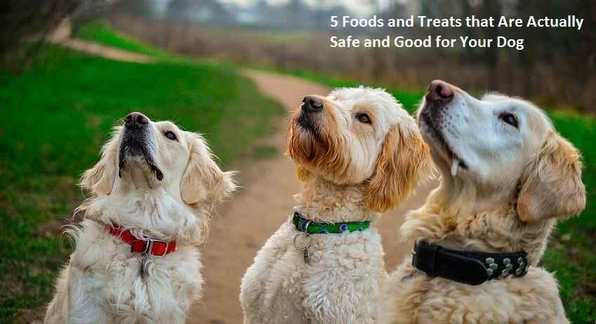 5 Foods and Treats that Are Actually Safe and Good for Your Dog