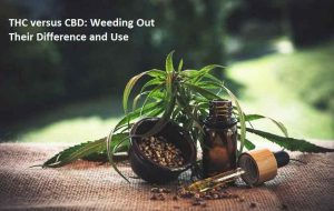 THC versus CBD Weeding Out Their Difference and Use